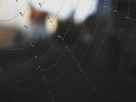 gotas de água em uma teia de aranha