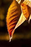 nas folhas de outono foto