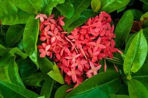 coração de flores com fundo de folha verde foto