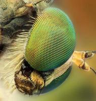 abelha metálica retrato extremo foto