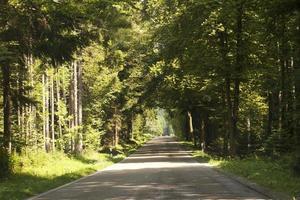 Straße Durch Den Wald foto