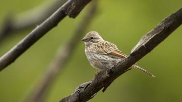 pássaro em um galho foto