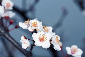 florescer na primavera foto