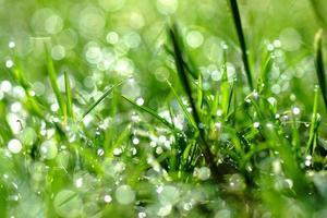 orvalho fresco da manhã na grama da primavera, fundo verde natural foto
