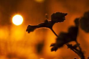 silhuetas de flores de pelargônio com fundo de manchas de bokeh à noite foto