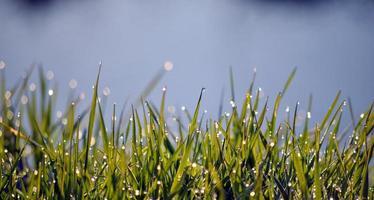 orvalho da manhã nas folhas da grama foto
