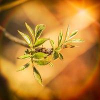 pequenas folhas tenras da primavera foto
