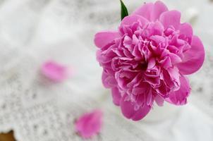 peônia rosa em jarra na toalha de mesa de renda vintage