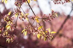 feche o ramo da flor alegre. foto