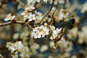 frutas florescem foto