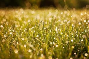 orvalho fresco da manhã na grama da primavera, fundo natural foto