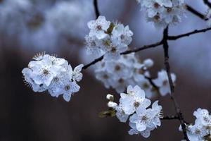 flor de fruta foto