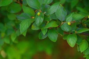 fundo de plantas verdes foto