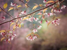 flores de cerejeira da primavera em tons pastel céu