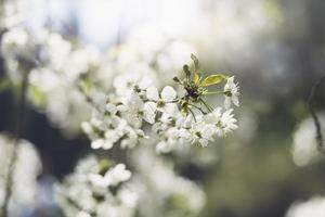 flores da árvore de flor foto