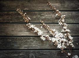 flores de cerejeira em fundo de madeira