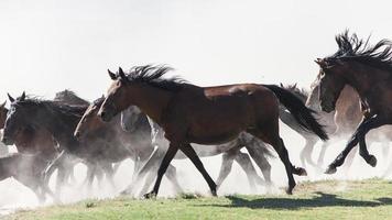 crina de bebê, cavalo selvagem - banco de imagem