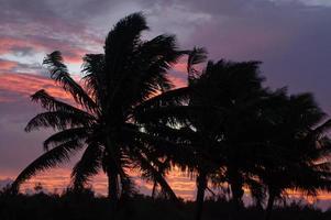 coqueiro na lagoa de aitutaki, Ilhas Cook foto