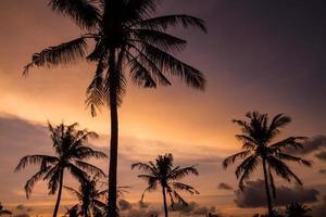 palmeiras no lindo pôr do sol
