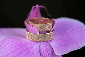 alianças de casamento e orquídea