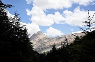 montanha e floresta foto