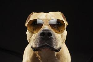 cão engraçado da equipe usando óculos escuros foto