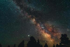 silhueta de árvores sob a noite estrelada