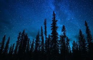 silhueta de pinheiros sob a Via Láctea