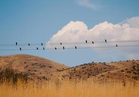 bando de pássaros foto