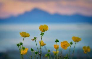 fotografia de foco seletivo de flores de botão de ouro foto