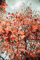 foto de baixo ângulo de folhas marrons