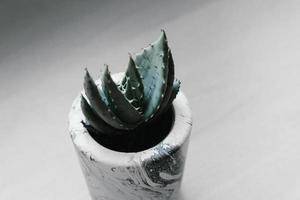 suculenta em vaso verde