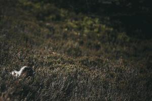 animal coberto pela grama