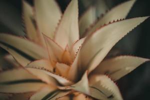 fotografia de foco raso de planta branca foto