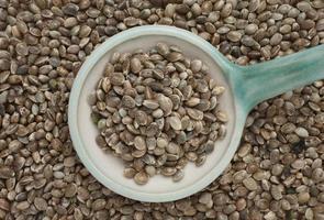 sementes de cânhamo ou nozes de cânhamo são uma fonte alimentar rica em proteínas foto