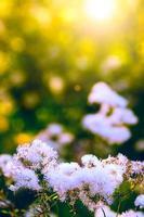 flores brancas selvagens foto