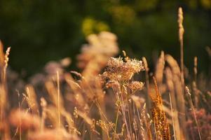 flores do prado e ervas medicinais sob a luz do sol laranja