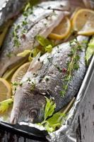 frutos do mar mediterrâneos foto