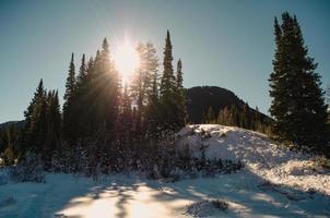sol brilhando através das árvores no topo da colina foto