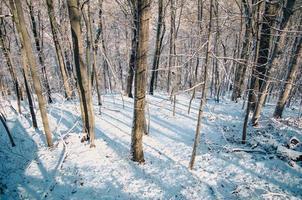 floresta coberta de neve foto