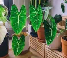 vasos de plantas na prateleira foto
