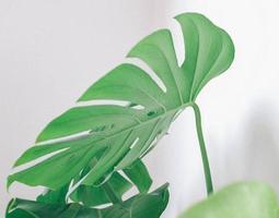 close-up de uma folha de uma planta de casa foto