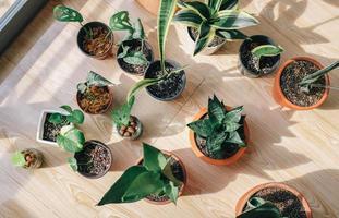 vista superior de vasos de plantas foto