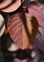 três folhas vermelhas