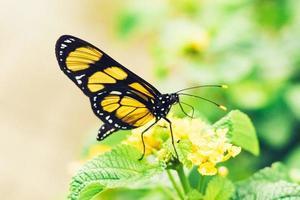fotografia rasa de foco de borboleta amarela foto