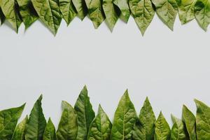 folhas verdes em um fundo branco