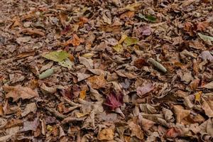 folhas marrons caídas foto