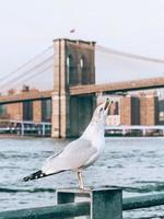 gaivota em nova york foto