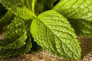 folha de hortelã verde orgânica foto