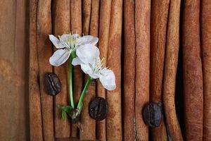 flores de cerejeira e galhos em um fundo de madeira foto